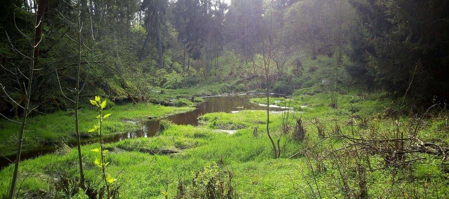 Zdjęcie zrobione zostało 2 maja w okolicach Rogóża. Przedstawia okolicę wzdłuż strumienia będącego prawym dopływem Łyny - wpada on do zalewu przed zaporą w Wojdytach.