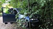 Rover uderzył w drzewo