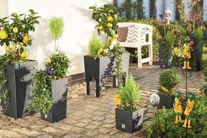 Kwiaty w barwnych donicach i stolik nakryty koronką
