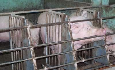Przemysłowe fermy zwierząt, a ochrona środowiska w województwie warmińsko-mazurskim