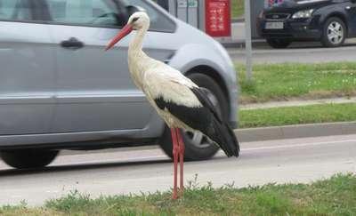 Mazury: Kle, kle autostop
