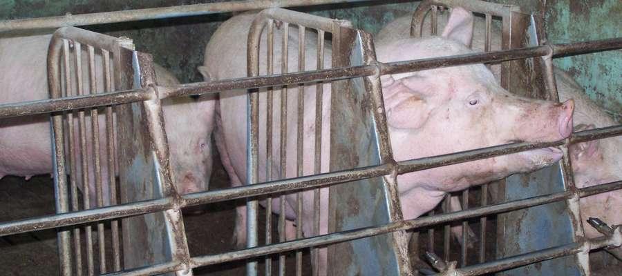 Aktualnie w naszym woj. warmińsko-mazurskim działa 35 ferm na pozwolenia zintegrowane, gdzie 22 fermy z produkcją drobiu, a 13 ferm z produkcja świń