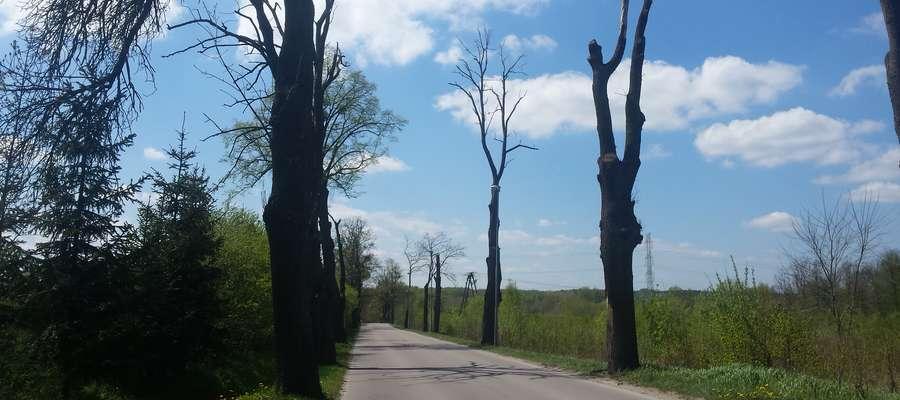kikuty drzew, Nikielkowo