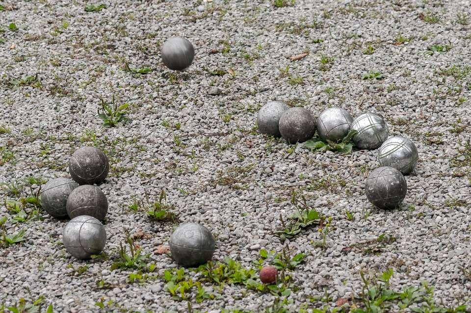 Zagraj w pogoń za świnką w Parku Centralnym - full image