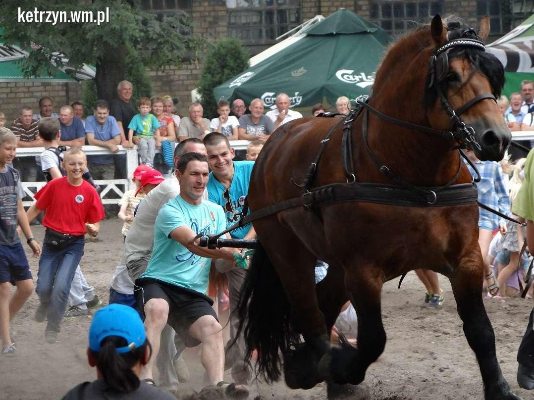 Czempionat koni ardeńskich na koniec gorącego weekendu - full image