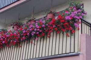 Masz piękny ogród lub balkon? Zgłoś się do konkursu!