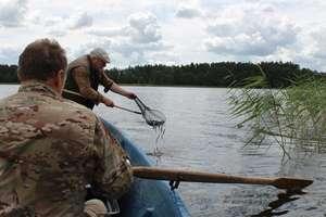 Młode węgorze trafiły do trzech jezior