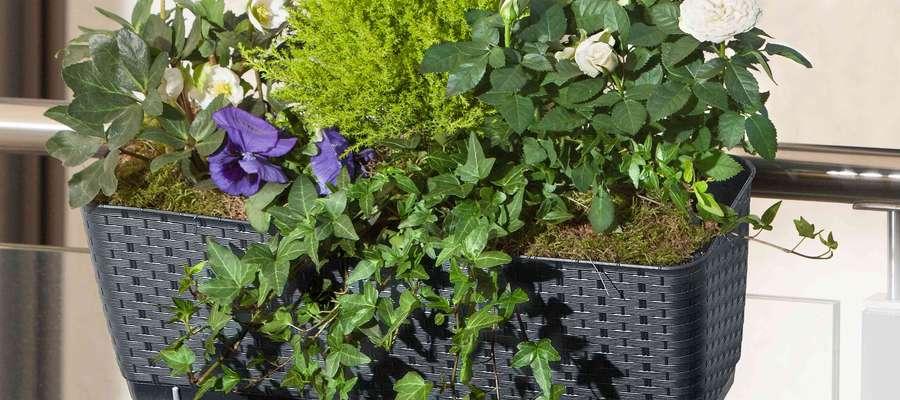 Jak zorganizować romantyczny ogród na balkonie lub tarasie