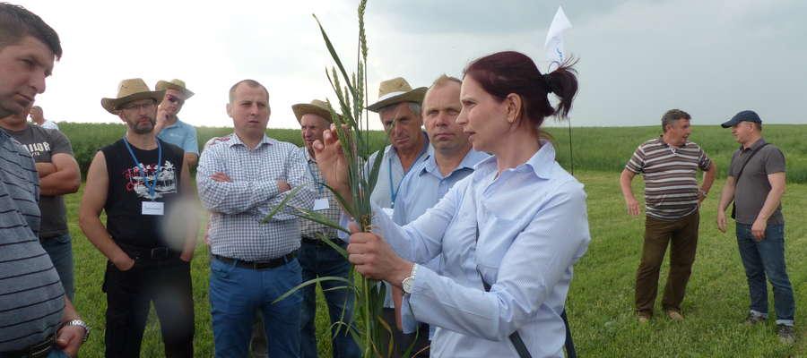 Podczas Panoramy Pól w Bałcynach dr Marta Damszel, fitopatolog z UWM w Olsztynie, przedstawiała rolnikom jak rozpoznawać choroby zbóż i jak im zapobiegać