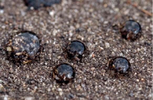 Na glebie przesuszonej krople cieczy opryskowej o dużym napięciu powierzchniowym słabo zwilżają powierzchnię gleby i nie wnikają w strefę kiełkowania chwastów