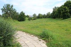 W Olsztynie powstanie psi park. Sprawdź gdzie