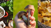 Kiedy dzieciom można podawać grzyby? PRZEPISY