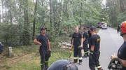 Strażacy z Elbląga walczyli ze skutkami nawałnicy w Borach Tucholskich