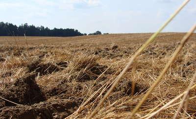 Dobry grunt to podstawa przyszłych plonów