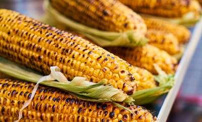 Złocista kukurydza - jakie są jej właściwości?