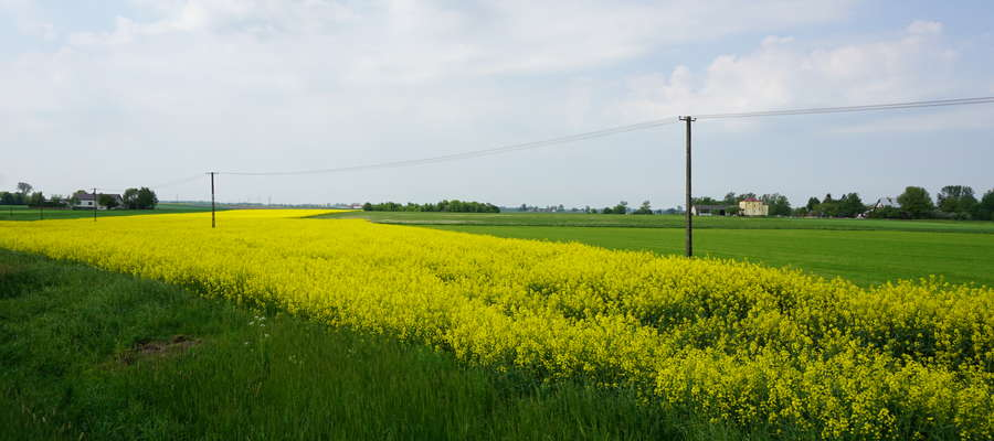 Im wyższe stosuje się dawki azotu, tym rośliny pobierają więcej siarki i tym częściej niedobór siarki może ograniczać plonowanie roślin