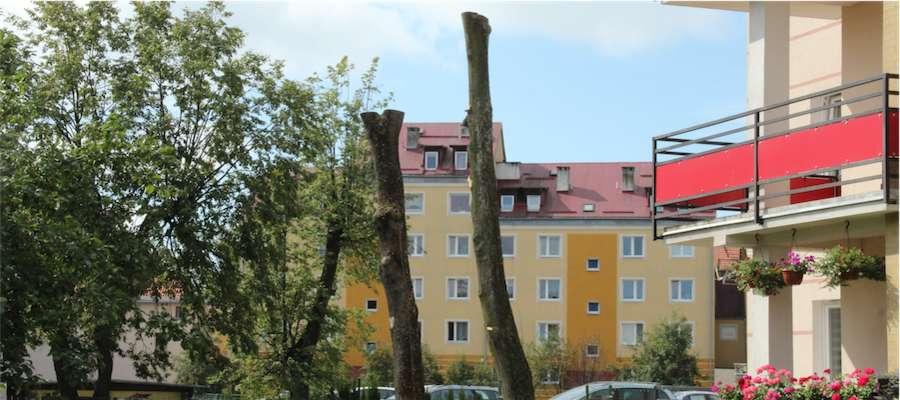 Wycinka drzew przy ul. Okrzei 1