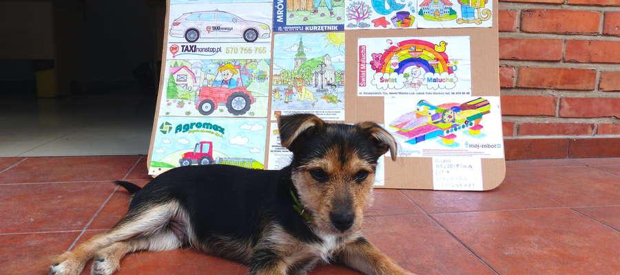 Tak wygląda jeden z przyniesionych kompletów kolorowanek. Dzielnie pilnuje go pies Maks.