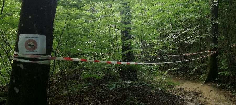 Teren wokół gniazda na szlaku oznakowało Nadleśnictwo