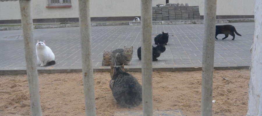 koty w więzieniu w barczewie