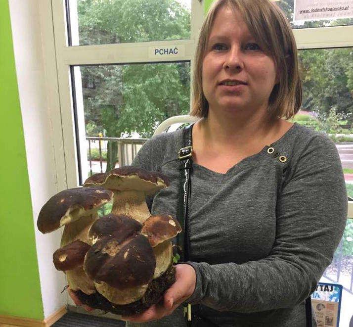 Pani Katarzyna Kaczorowska z Sołtman na rodzinę borowików trafiła w lesie gawlickim