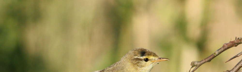 Malutkie ptaszyny i wielki sukces