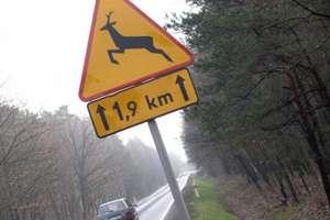 Uwaga, zwierzęta na drodze! Coraz więcej wypadków z ich udziałem
