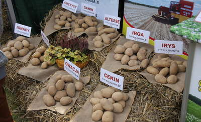 Mazurski Dzień Ziemniaka w Kraplewie już po raz 10!