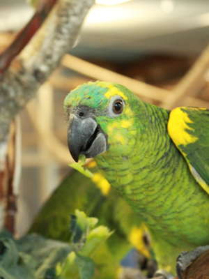 Papuga – najlepszy sposób na jesienną chandrę