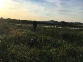 Pies Hardo pomógł w odnalezieniu zaginionego w okolicach Górowa Iławeckiego.