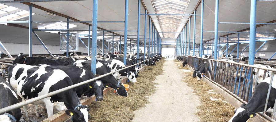 Od 1 września 2017 r. ARiMR ma pod opieką m.in. tymczasową nadzwyczajną pomoc dla rolników w sektorach hodowlanych