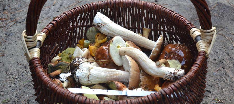 Kosz grzybów w 45 minut, jak widać szybko, łatwo, przyjemnie i zapewne będzie smacznie
