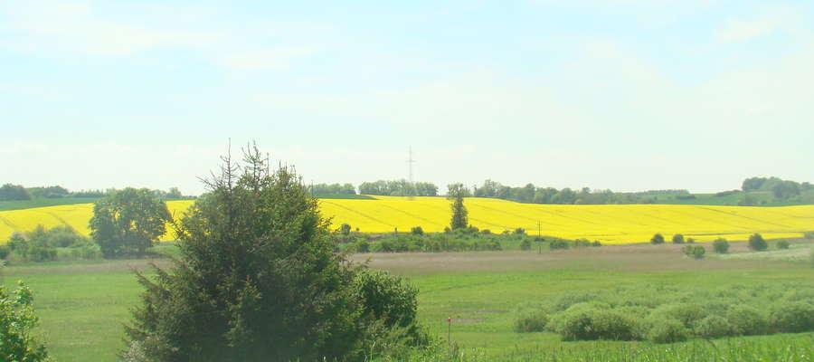 Wnioski można składać do 25 września 2017 roku w Urzędzie Marszałkowskim Województwa Warmińsko-Mazurskiego w Olsztynie w Departamencie Rozwoju Obszarów Wiejskich i Rolnictwa
