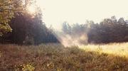 Zdjęcie Tygodnia. Słoneczny rozbłysk w lesie pod Bisztynkiem