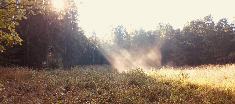 W lesie w okolicach Bisztynka
