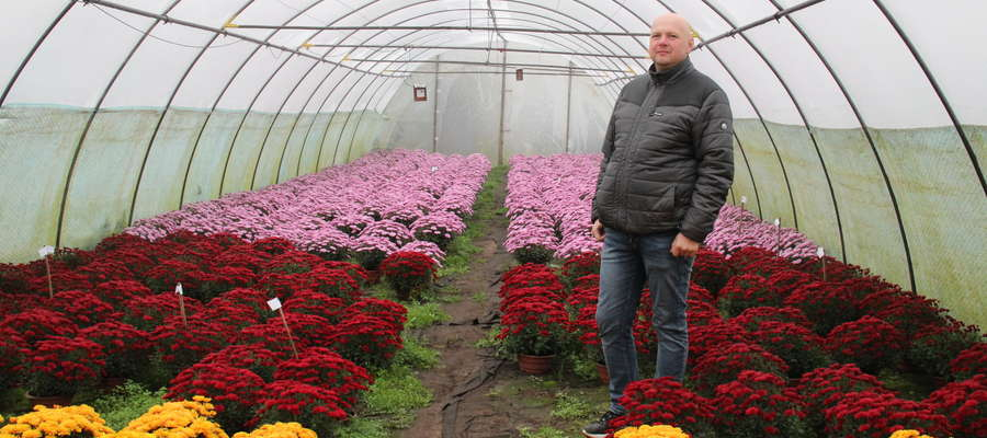Grzegorz Kornak w swoim ogrodnictwie ma wiele odmian chryzantem