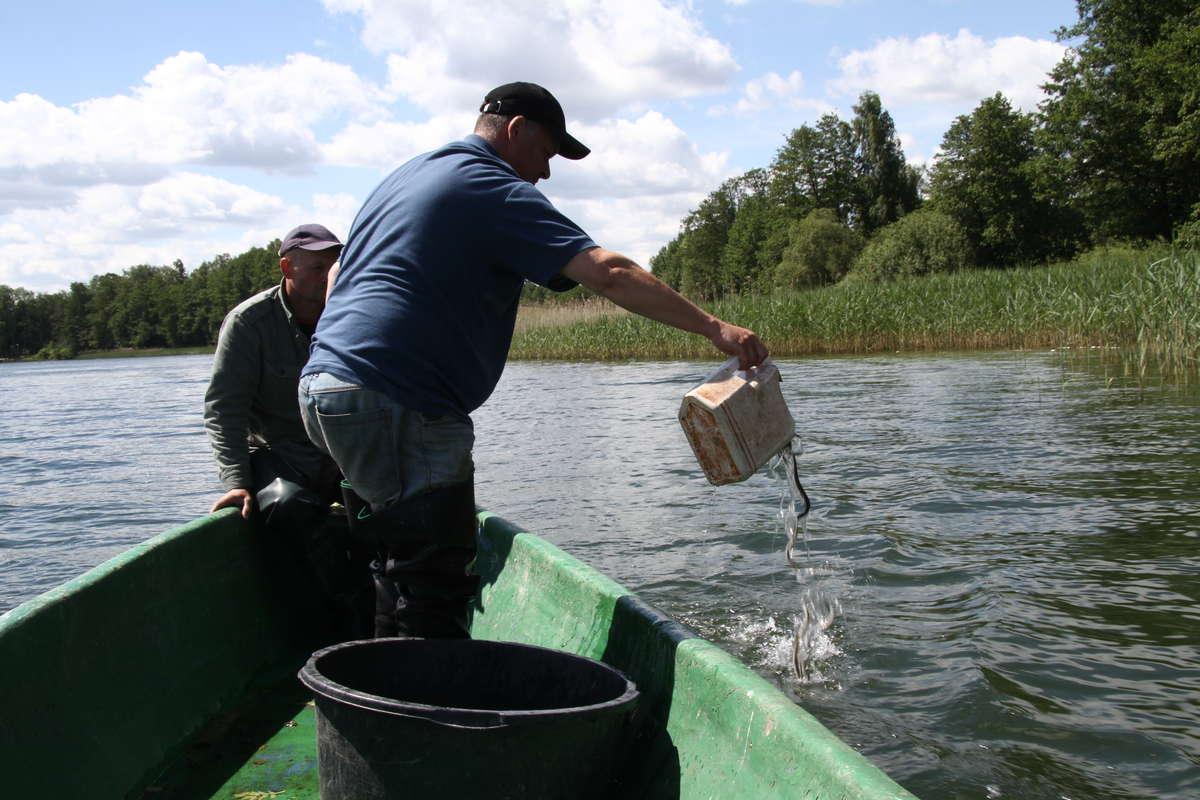 Refundowany jest również zakup ikry, ryb i innych organizmów wodnych, czyli tzw. materiału obsadowego