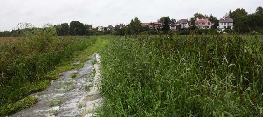 Między ulicami Tuwima a Kalinowskiego jest wał przeciwpowodziowy. Jacek Pachucki proponuje, by zamiast wału utworzyć jezioro przepływowe