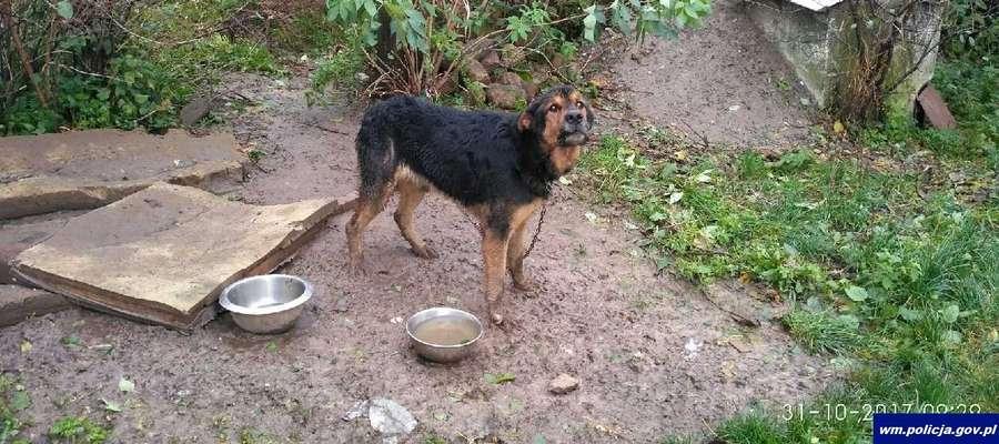 Pies, któremu udzielono pomocy