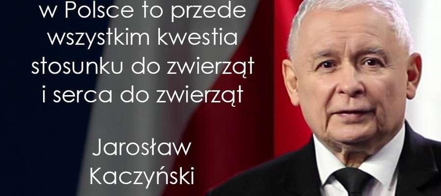 Kaczyński w obronie zwierząt i dobrze o  PO