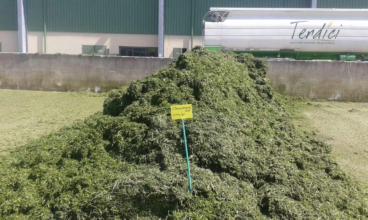 Właśnie dostarczono na plac kolejną partię podwiędniętej zielonki z lucerny ekologicznej — czerwiec 2017 r.