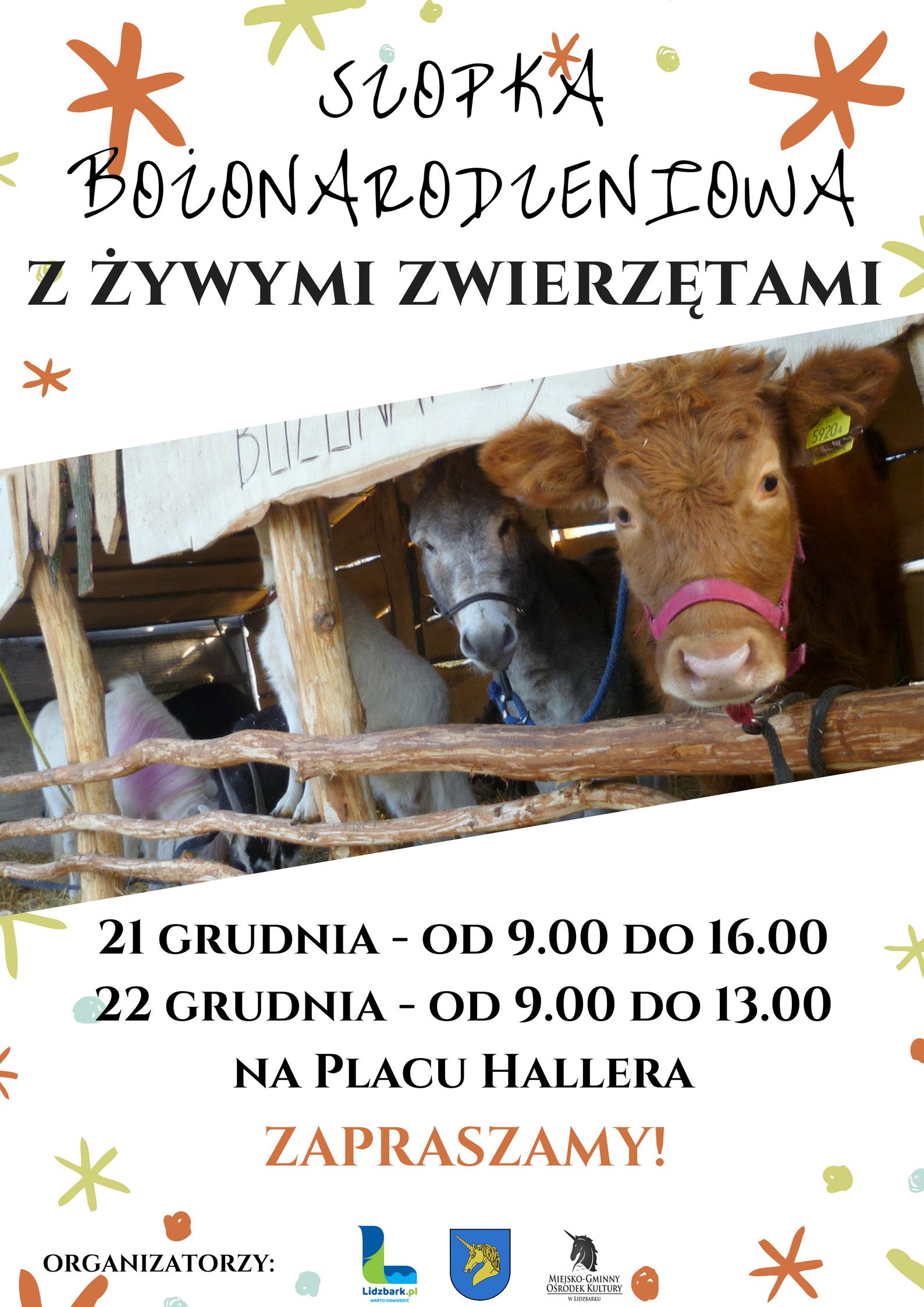 Szopka Bożonarodzeniowa z żywymi zwierzętami w Lidzbarku