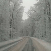 Zdjęcie Tygodnia. Zimowa droga w lesie