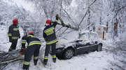 Powalone drzewa i przygnieciony samochód w Olsztynie. Pierwsze skutki ataku zimy [ZDJĘCIA, WIDEO]