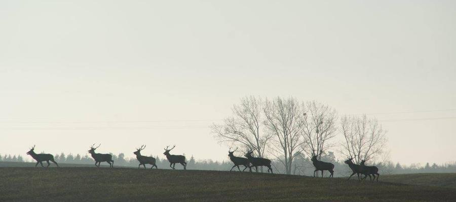 Zdjęcie wykonane w okolicach Parkoszewa 17 grudnia.