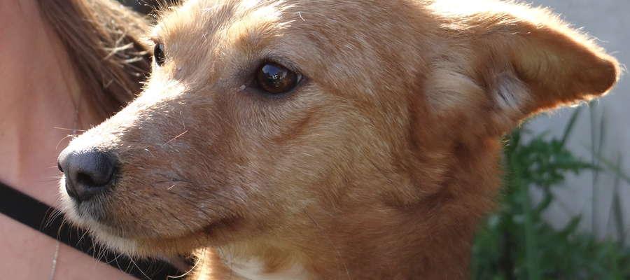 Pieski do adopcji w Kiwitach