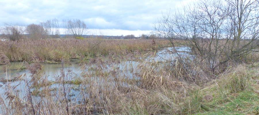 Dom sąsiaduje z wałami rzeki Balewki
