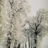 Zdjęcie Tygodnia. Zimowa droga koło Sępopola