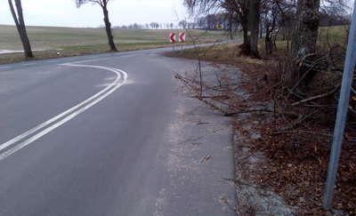 Gałęzie wystają na drogę. To stwarza niebezpieczeństwo