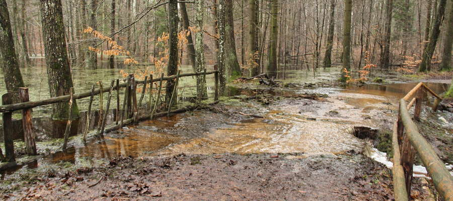 Woda zalewa drogi w Lesie Miejskim k. Giżycka